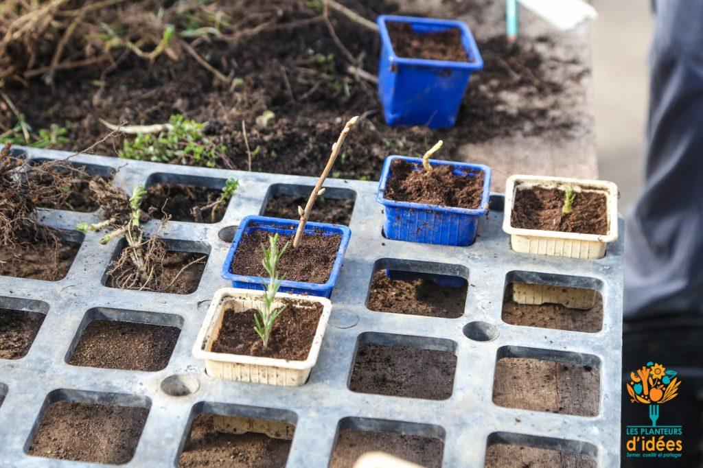 Atelier : Réussir ses semis